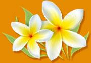 flower-illustration.jpg