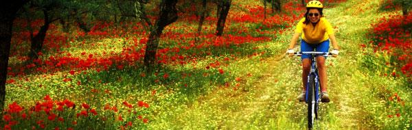 bike-flower-field.jpg