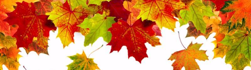 Autumn Leaves Header
