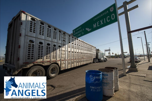 Slaughter Truck crossing into Mexico