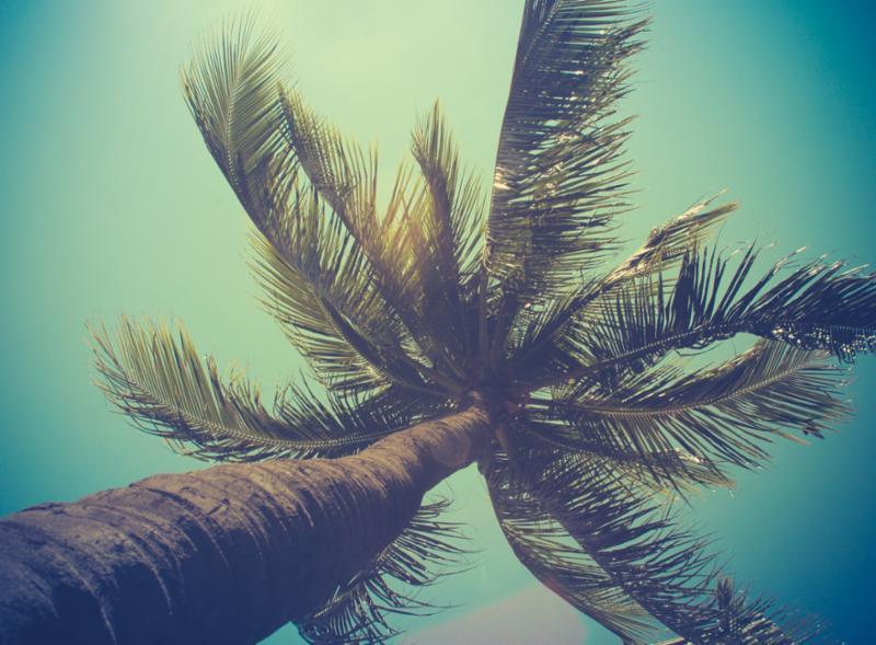 palm_tree.jpg