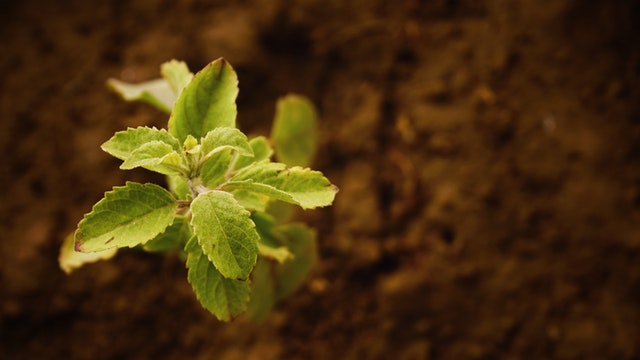 Growing Plant