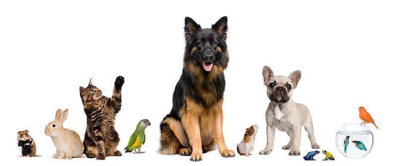 group pets