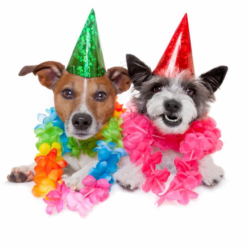 birthday_dog_party2.jpg