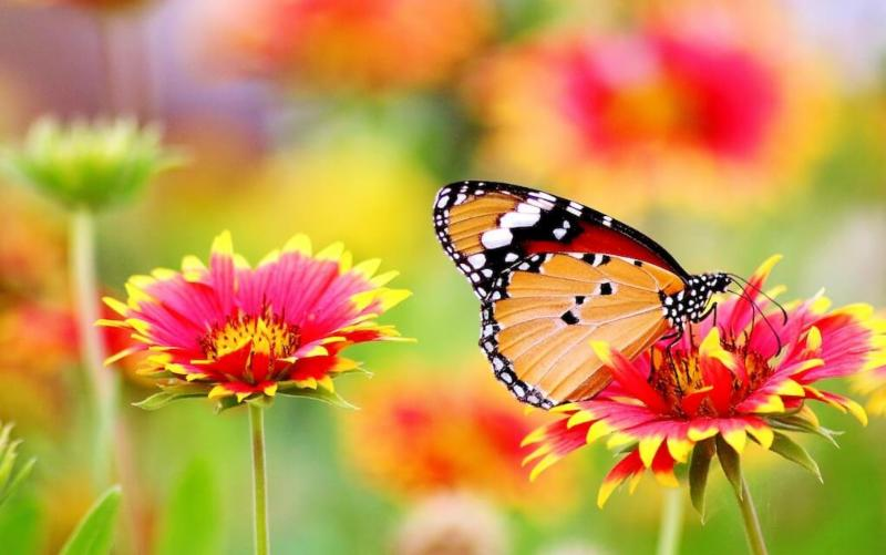 Photo of pretty flower and butterfly