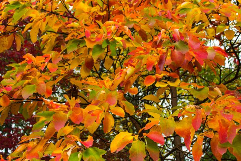 colorful_leaves_on_tree.jpg