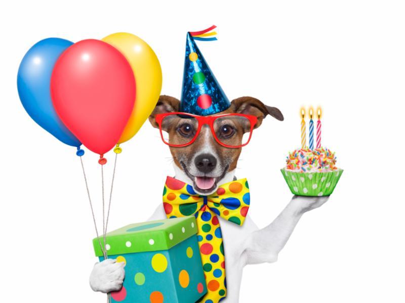 birthday_dog_party.jpg