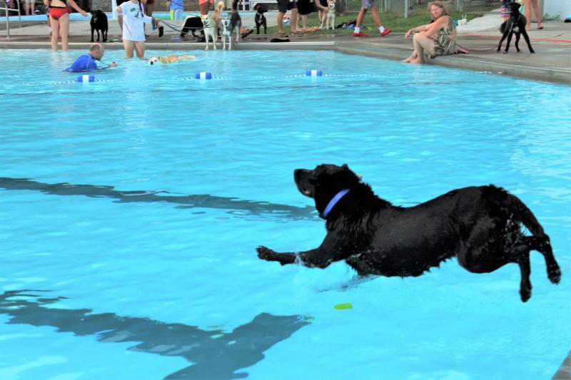 Dog jumps into Oak Ridge outdoor pool during Puppy Pool Party in August