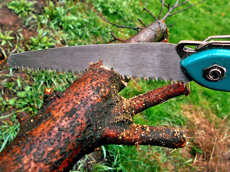 Spring-pruning.jpg
