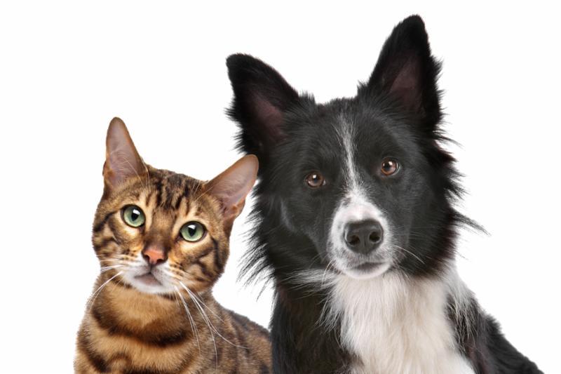 dog_cat_portrait.jpg