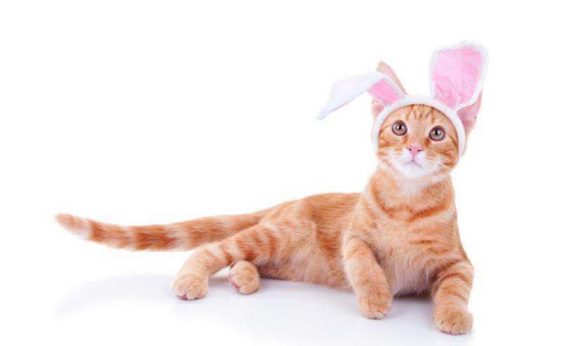 easter_bunny_cat.jpg