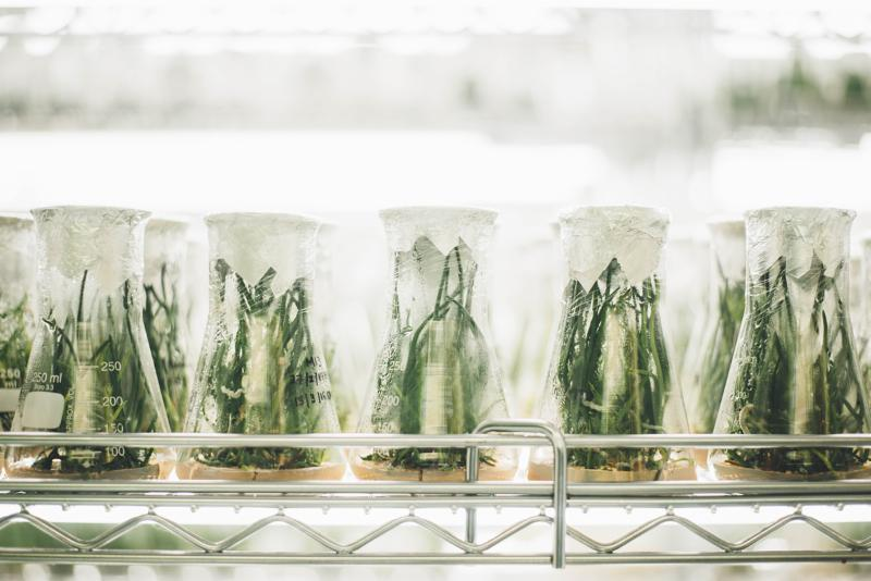 Plants growing in a lab
