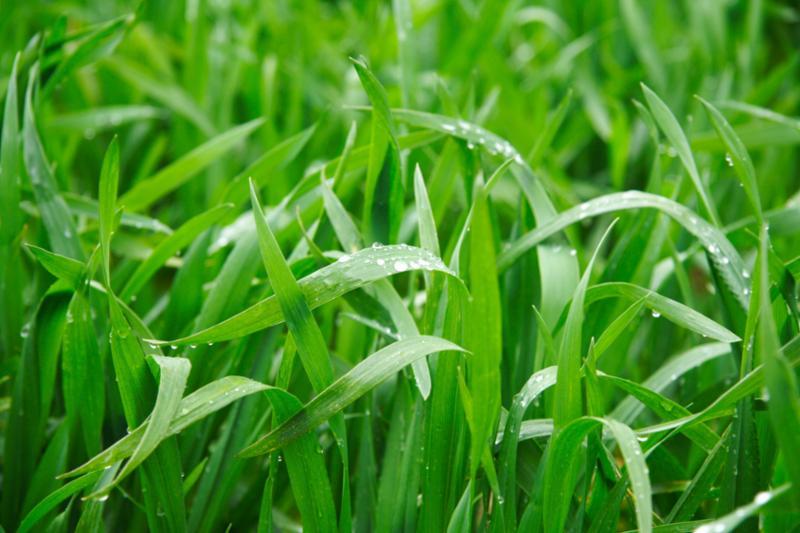 grass_in_rain.jpg