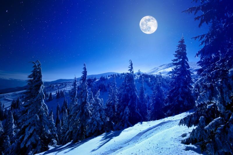 MoonTreesSnowHoliday18