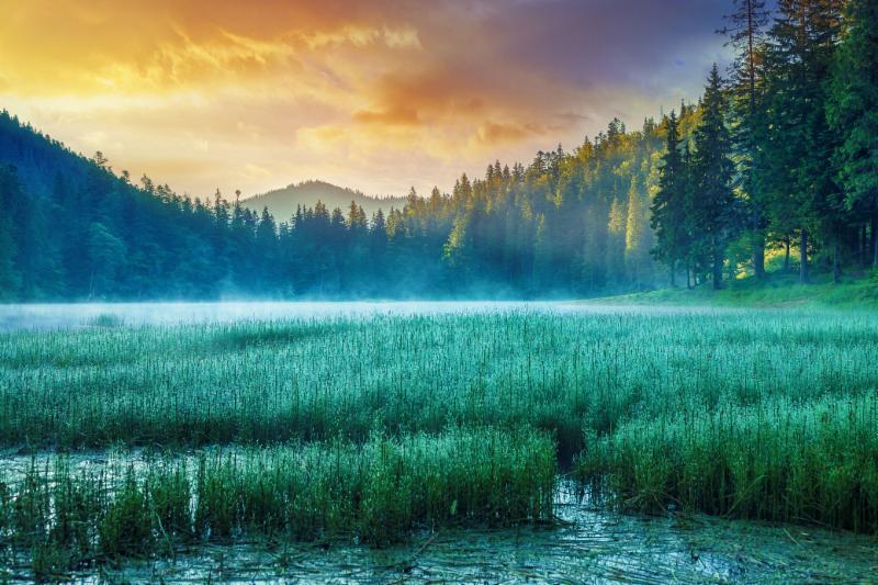 Peaceful Lake & Trees