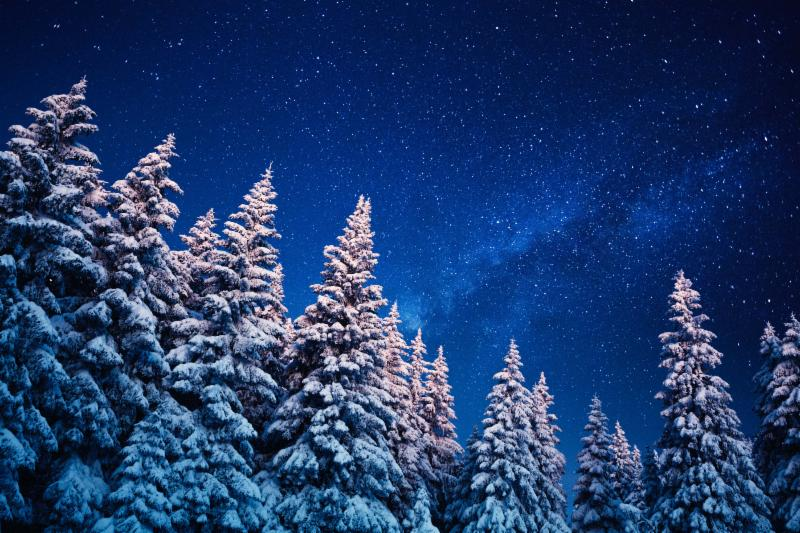 Starry night snowy trees