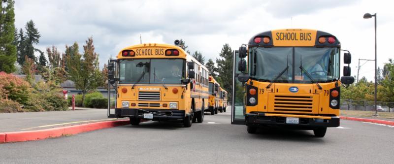 School busses