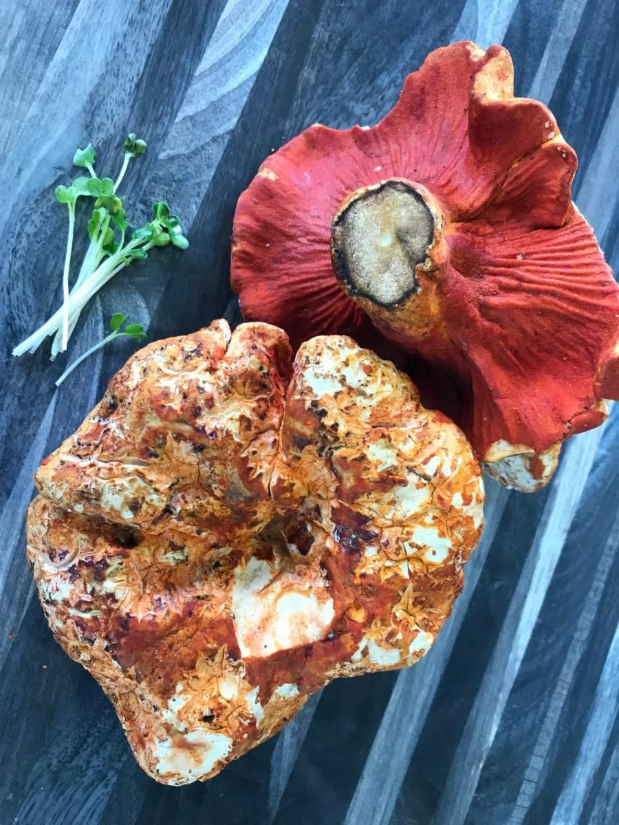 Lobster Mushroom