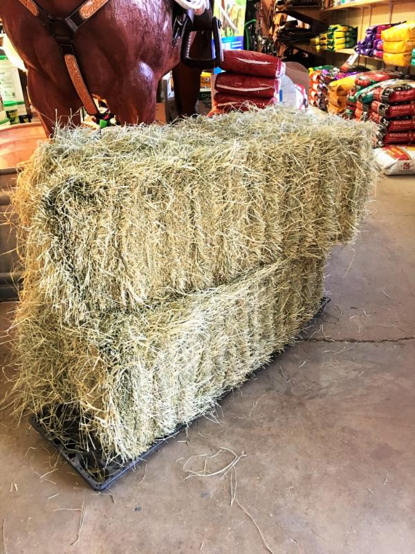 Tifton Hay is now available at Pasturas Los Alazanes.