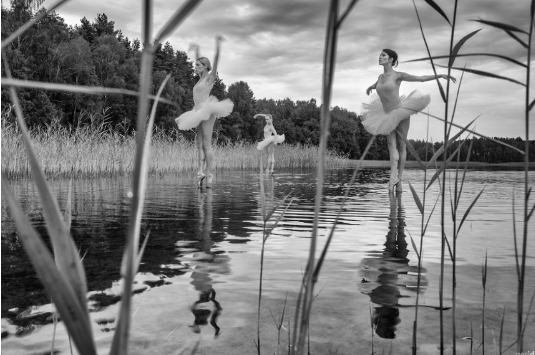 Photograph by  Giedrius Dagys of his cycle Carnival of the animals