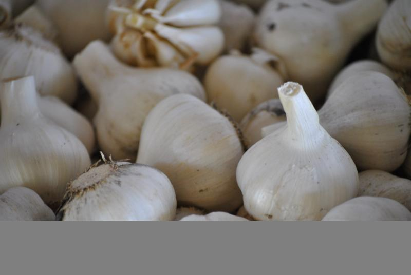 Garlic is in Season!