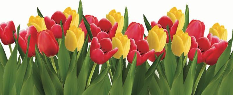 red_yellow_tulips.jpg