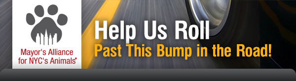 Help Us Roll Past This Bump in the Road!