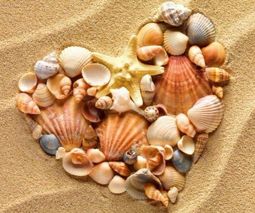 Heart made of sea shells and the starfish lying on a beach sand summer background