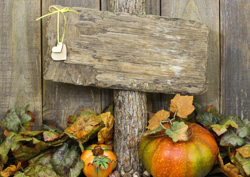 Rustic blank sign with heart hanging on tree with fall foliage and pumpkin border