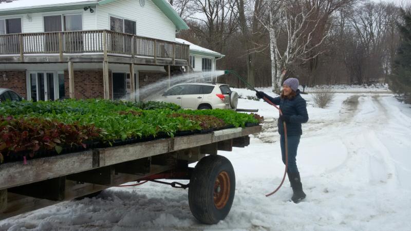 Winter watering