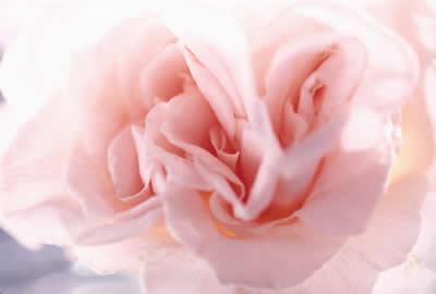 soft-pink-flower.jpg