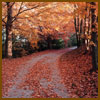 autumn-path-sm.jpg