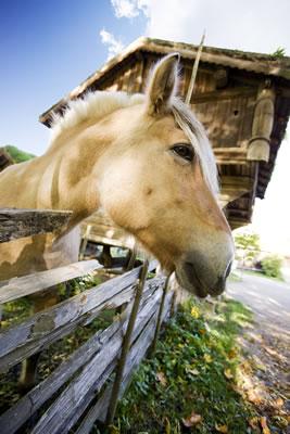 horse-fence.jpg