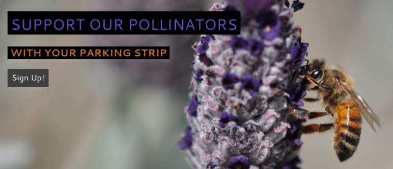 Pollinator Parkways