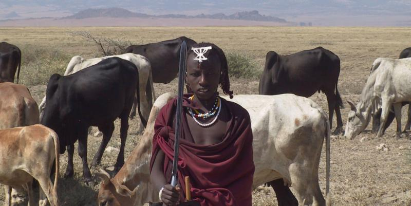 Maasai with cattle by Mark Ritchie