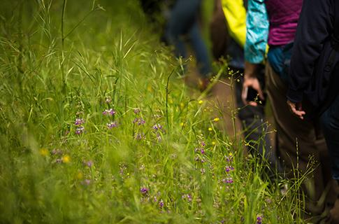 Wildflower walk at Sonoma Valley
