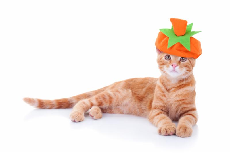 cat_with_pumpkin_hat.jpg