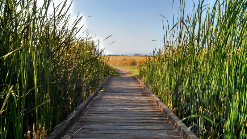 Coyote Hills boardwalk
