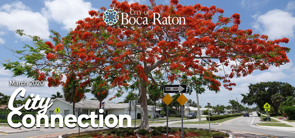 City of Boca Raton March 2020 City Connection. Royal Poincenia tree.