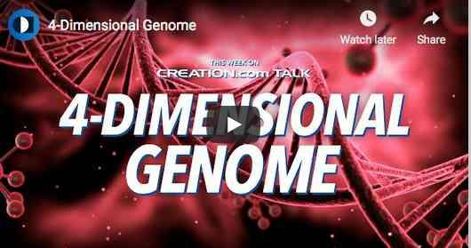 Four Dimensional Genome Refutes Evolution and Naturalism - Video