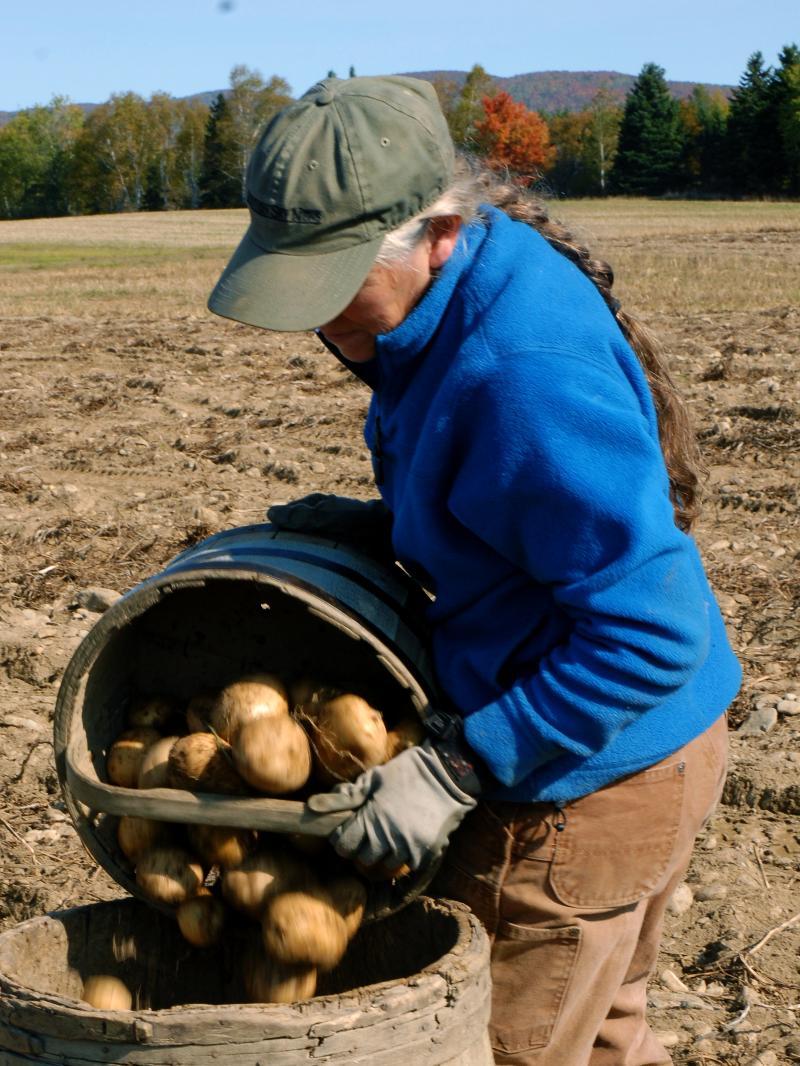 Penny picking potatoes