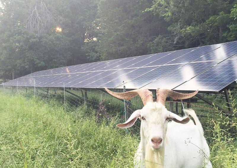 Little Seed Farm Solar