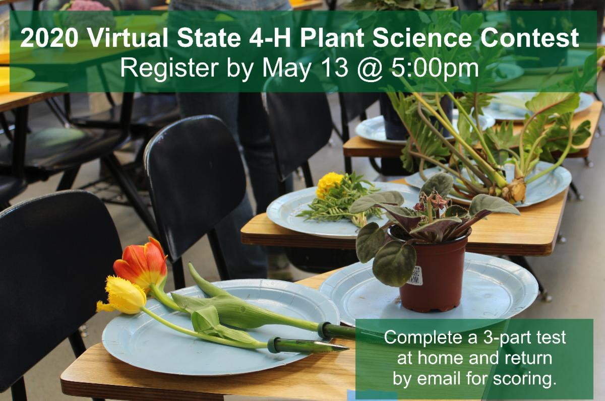 Virtual Plant Science contest