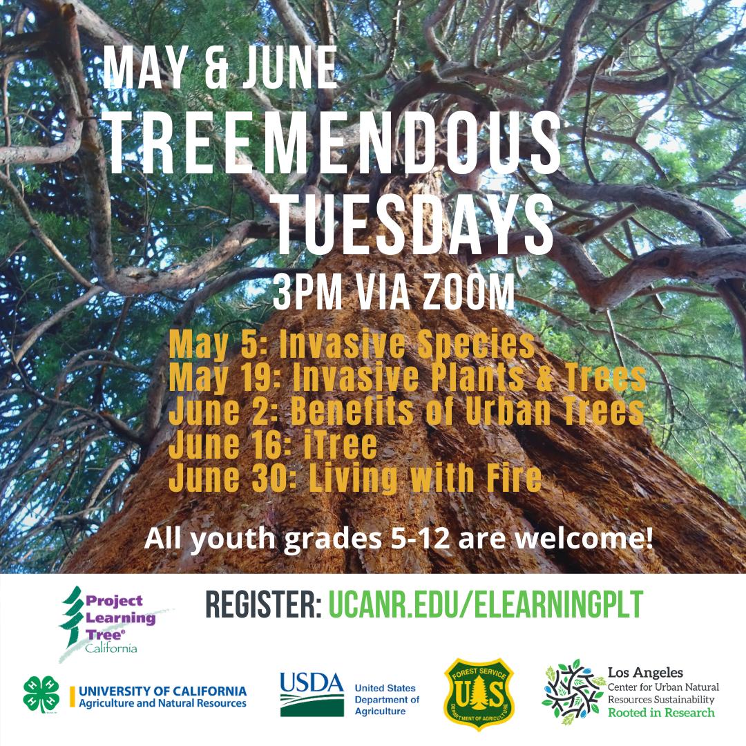 Treemendous Tuesdays