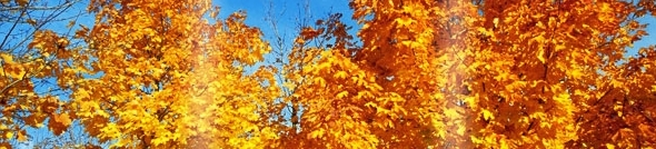 yellow-leaves-tree.jpg