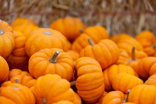 Pumpkin-banana muffin recipe