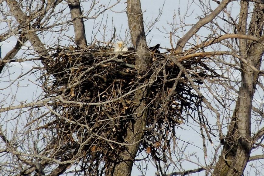 Bird Nest CS 201.jpg