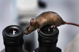 banal mice pics