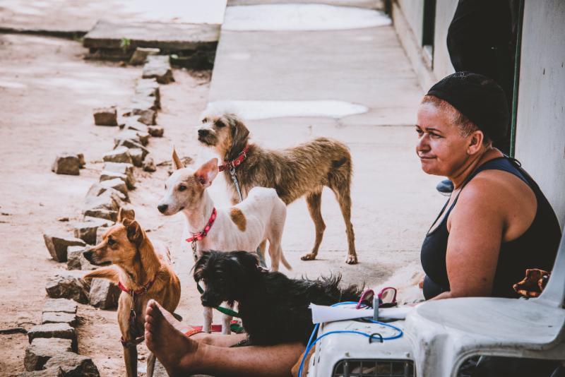 Porto de Galinhas_ Brazil Small Animal Project