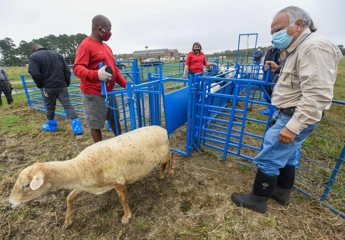 Dr. E. Nelson Escobar conducts the tour of UMES Sheep and Goat Farm.